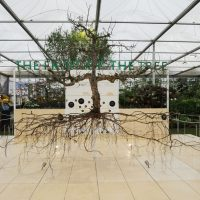 CHELSEA FLOWER SHOW CELEBRATES CENTURY OF SCIENTIFIC EXCELLENCE